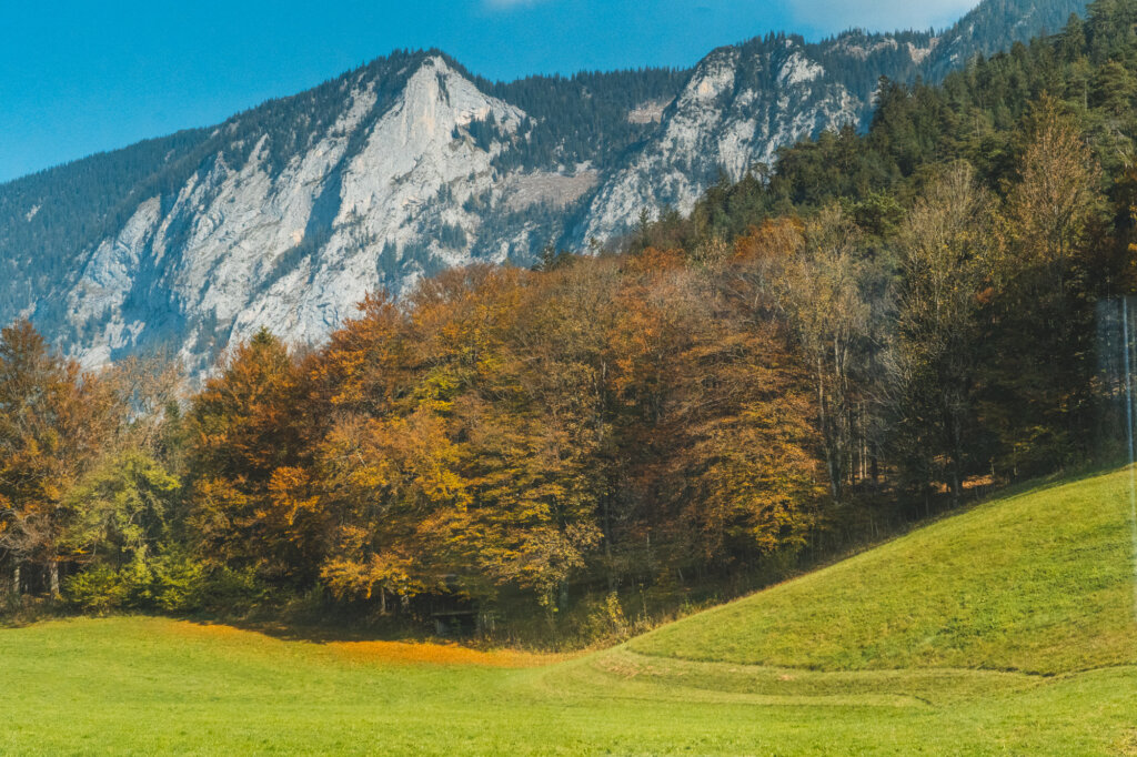 Mountains and trees train view from Munich to Berchtesgaden