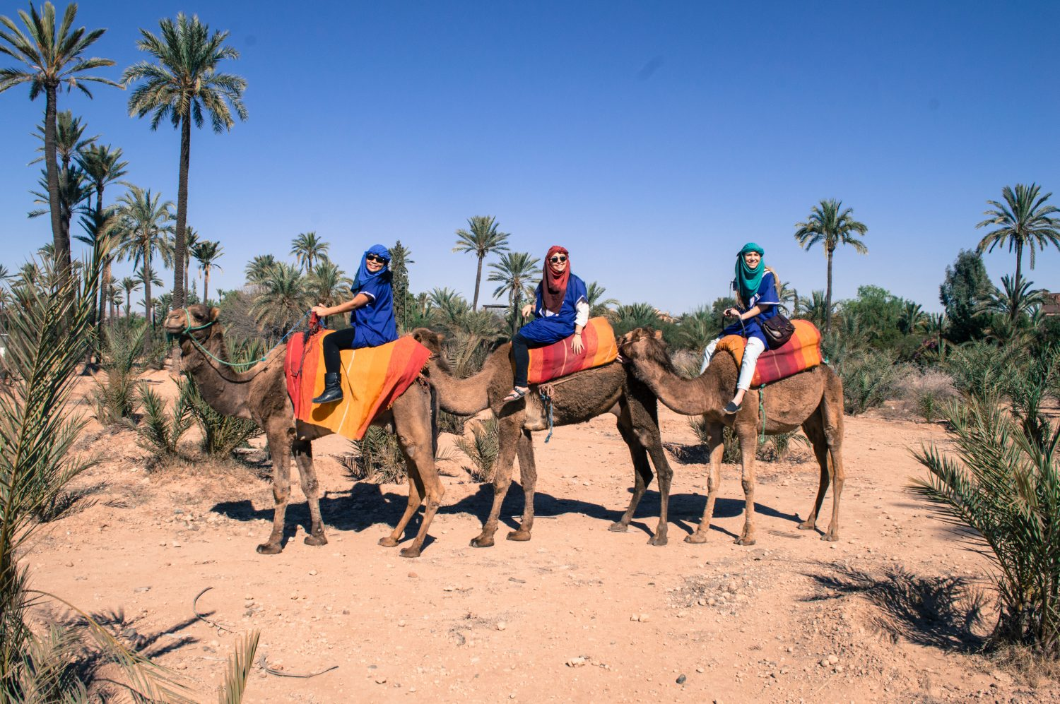 Camel riding in Morocco