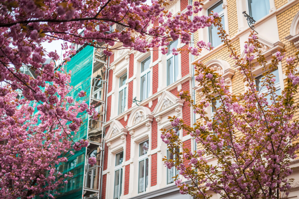 Cherry blossom trees framing a colourful building facade in Bonn, Germany