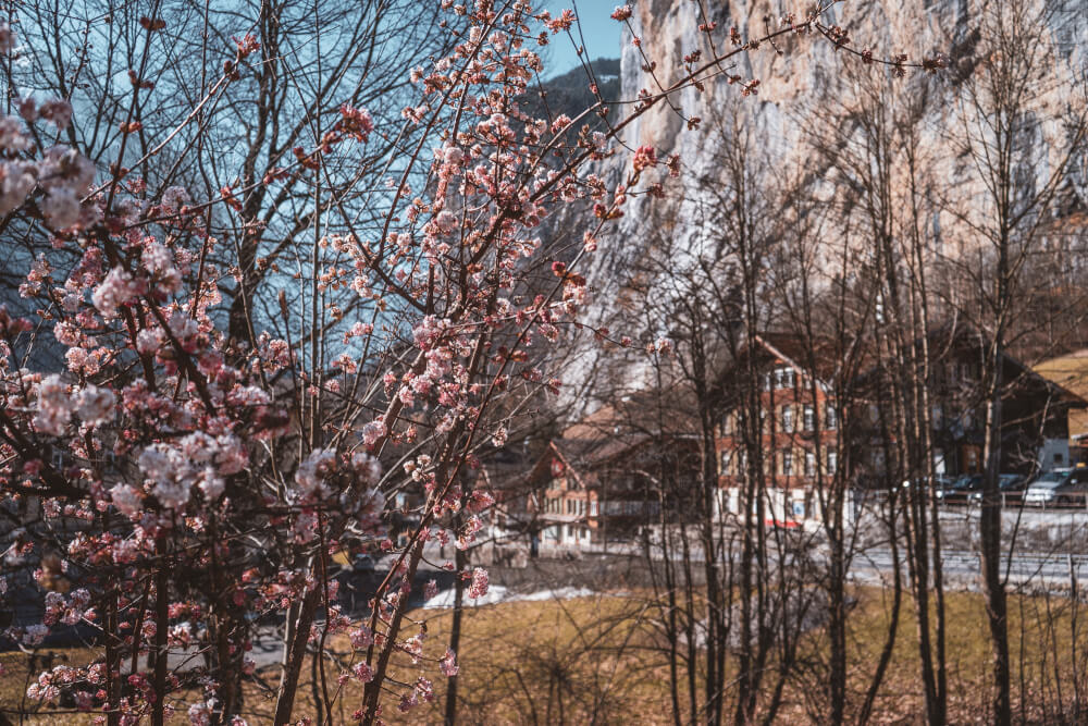 Lauterbrunnen in early Spring with flowers blooming