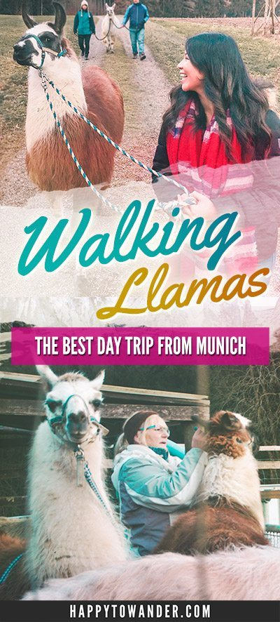 Llama walking in Bavaria! Seriously the best day trip ever from Munich.