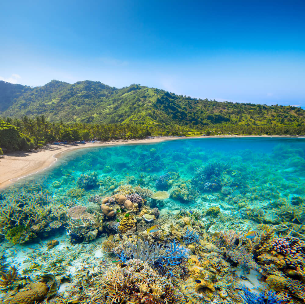 Clear blue water in Lombok, Indonesia showing off the unique marine life