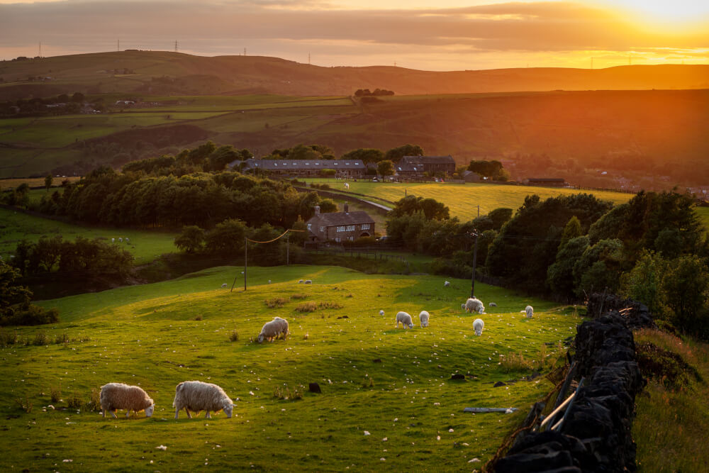 A sunset with rolling hills and sheep in the Lake District, England.