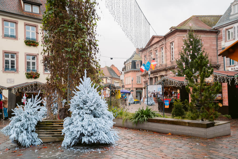 Christmas trees in a square in Selestat France