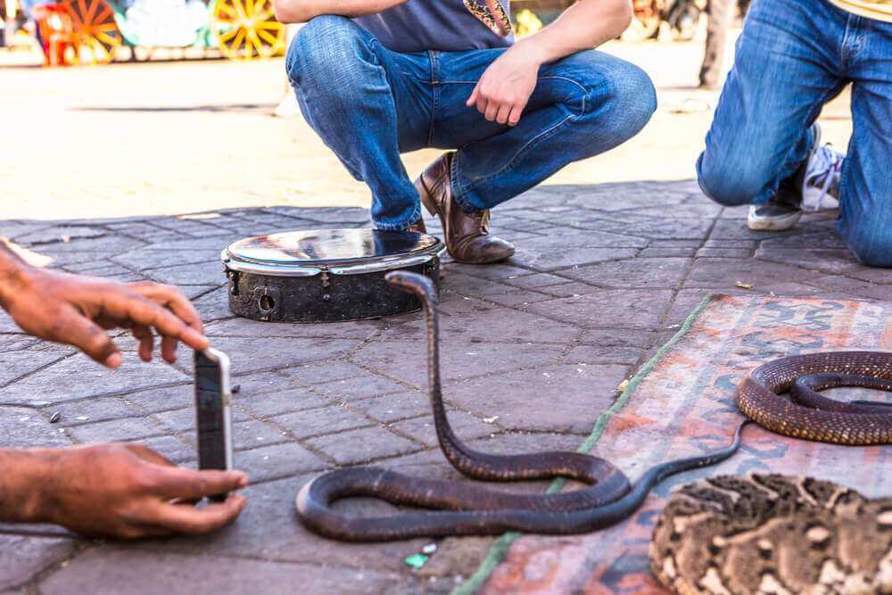 Snake in Marrakech, Morocco