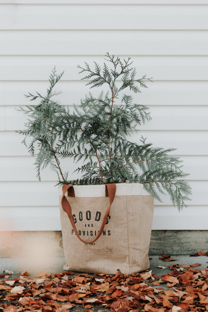 Canvas bag on the floor holding a plant