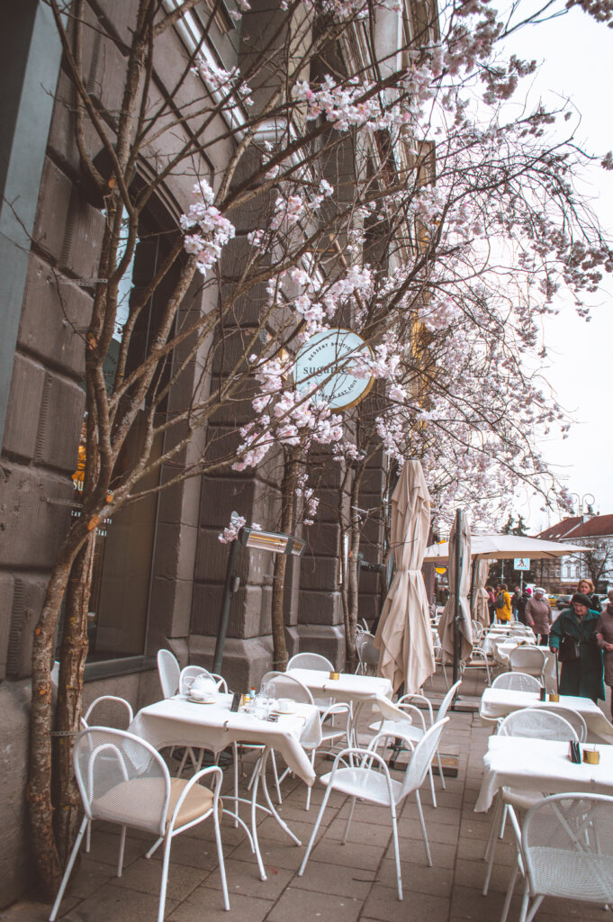 Pretty cafe with floral blooms in Vilnius, Lithuania
