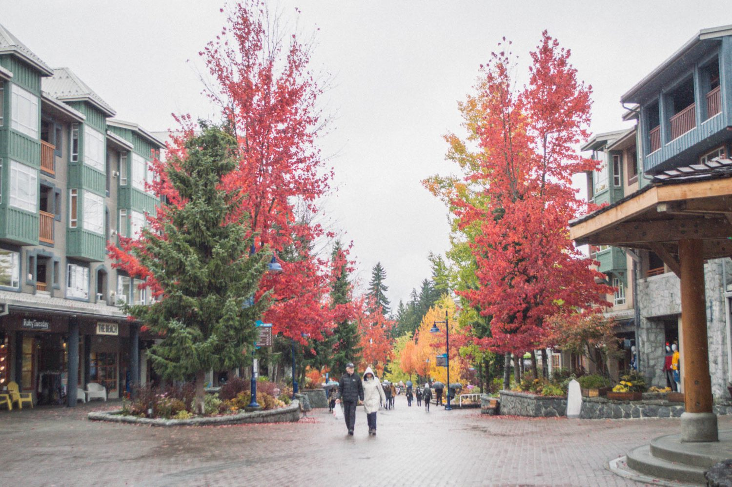 whistler-in-autumn-0310
