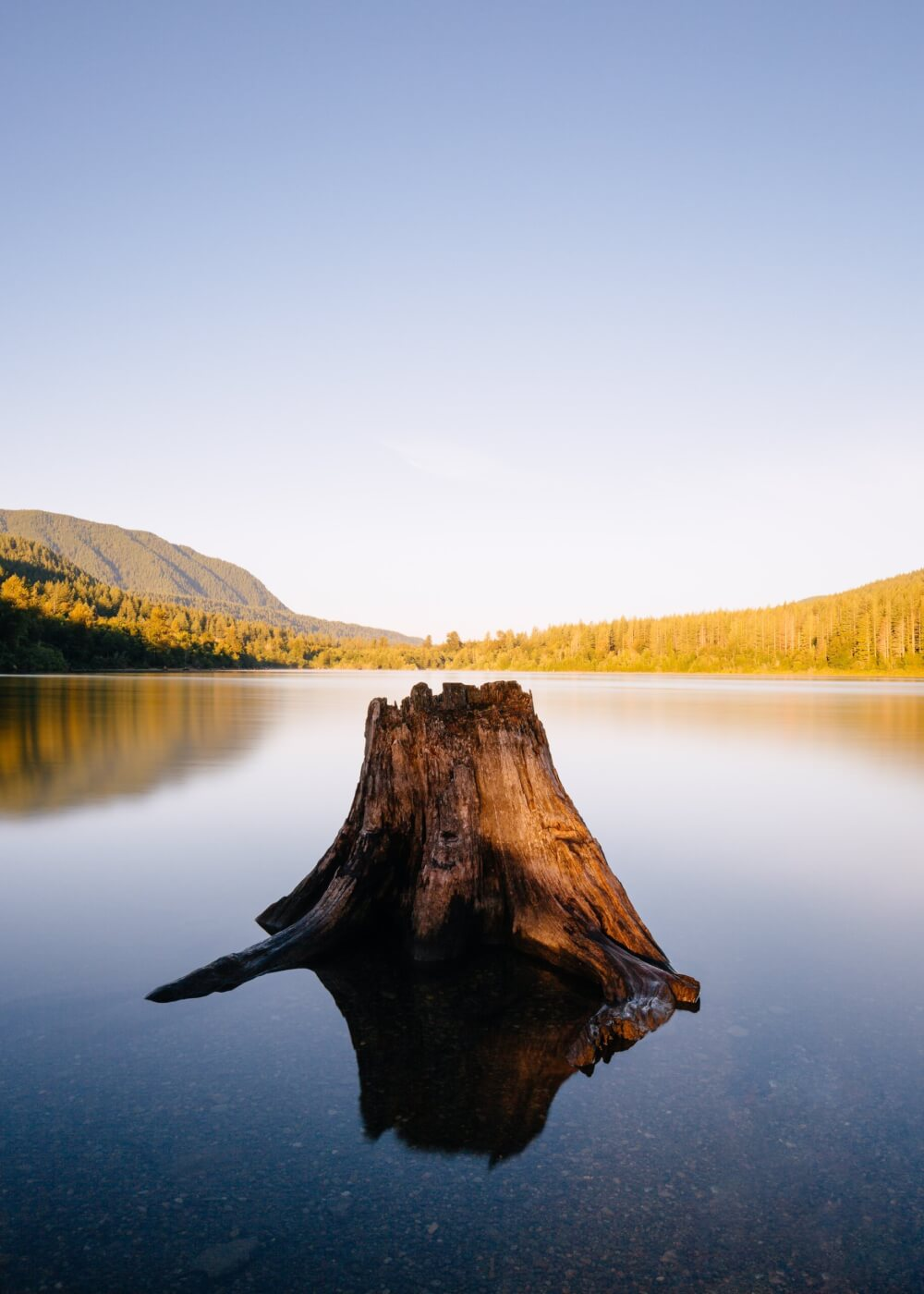 A photo of a tree stump surrounded by water on a crisp morning with forests and vegetated hills in the distance.