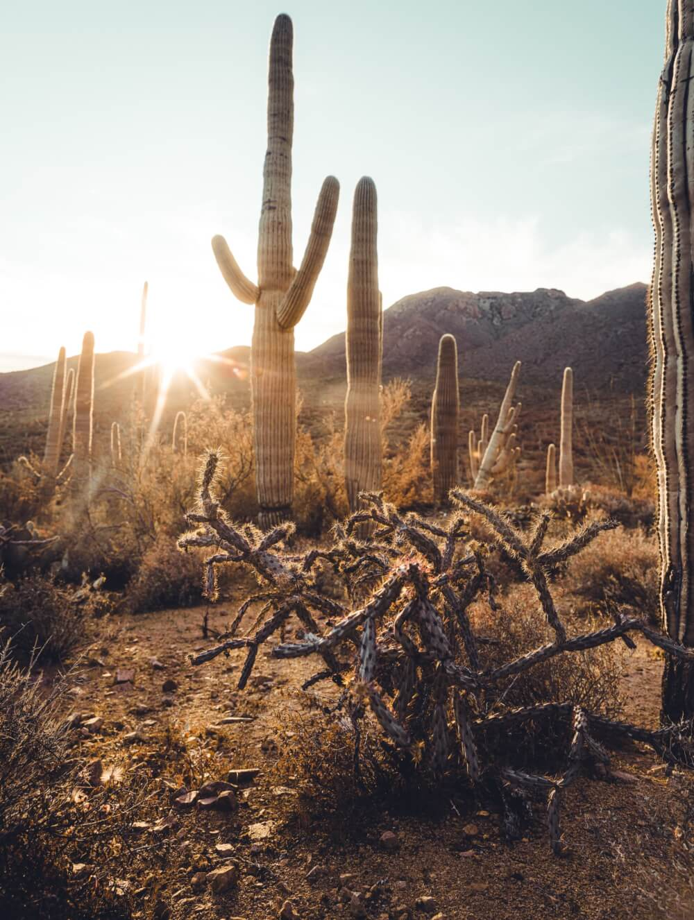 A view of towering cacti, arid vegetation, and rocky hills in the background with the sun pressing down.