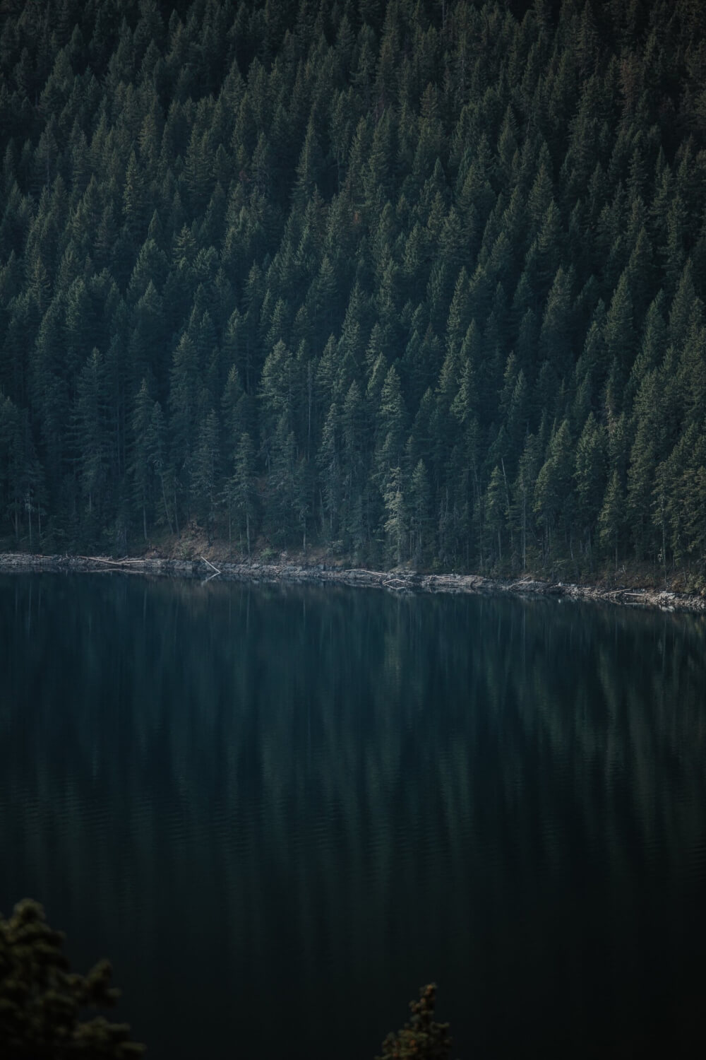 A view of Washington's dense forest across a placid lake. The ample pine trees and water make it the ideal habitat for Sasquatch.