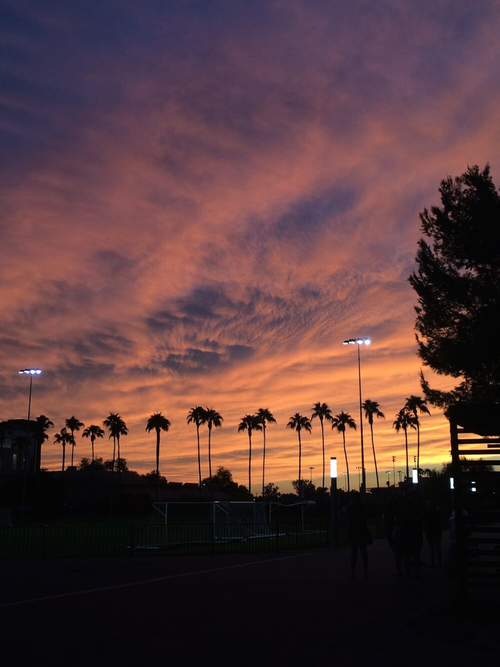 A view of the Phoenix sky at dusk, with streetlights and palm trees and a convergence of lurid clouds.