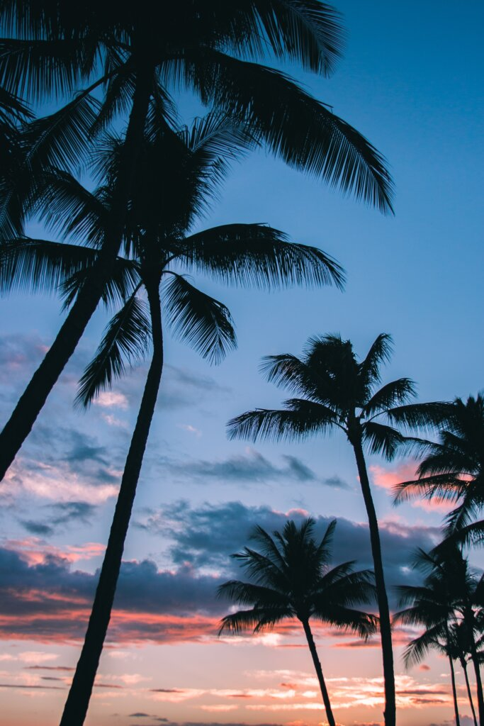 Palm tree silhouettes in front of a beautiful colourful sunset